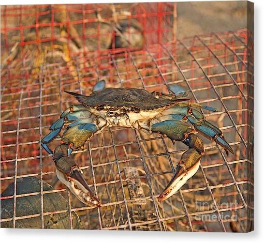 Crab Got Away Canvas Print