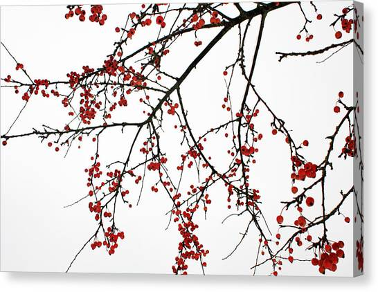 Crabapples I Canvas Print