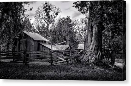 Cracker Barn And Gnarled Southern Red Cedar Canvas Print