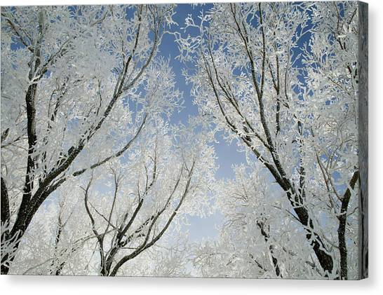 Crackling Cold Canvas Print by Steve Smith