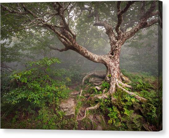 Blue Ridge Parkway Canvas Print - Craggy Gardens Blue Ridge Parkway Asheville Nc - Enduring Craggy by Dave Allen