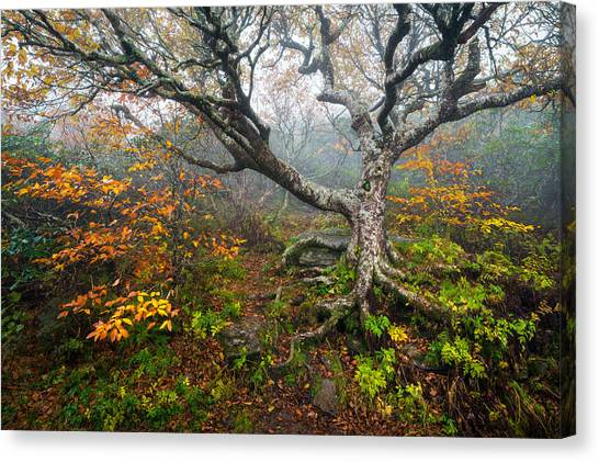 Blue Ridge Parkway Canvas Print - Craggy Gardens North Carolina Blue Ridge Parkway Autumn Nc by Dave Allen