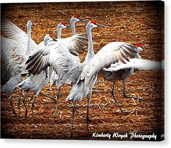 Crane Ballet  Canvas Print
