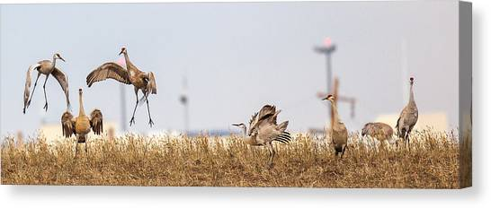 Crane Dance Canvas Print
