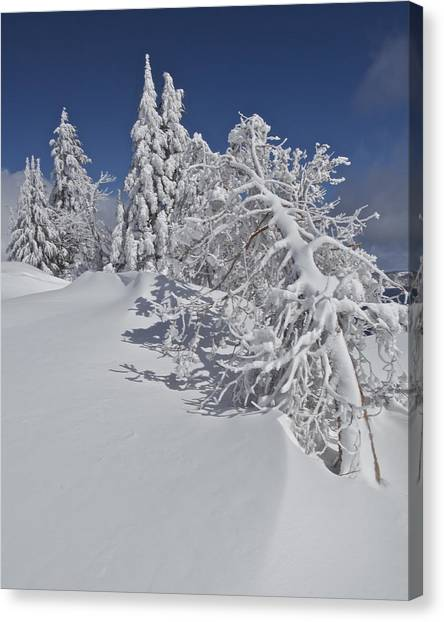 Crater Lake Trees 2 Canvas Print