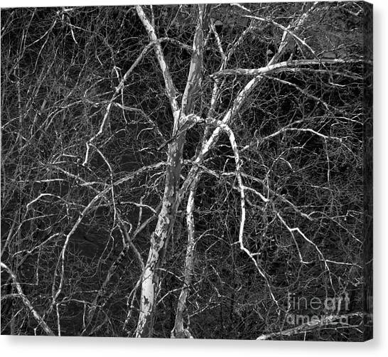 Canvas Print featuring the photograph Crazy Camouflage Tree by Kristen Fox