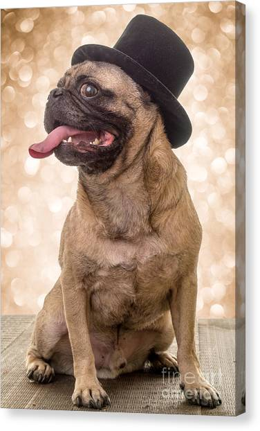 Mastiffs Canvas Print - Crazy Top Dog by Edward Fielding
