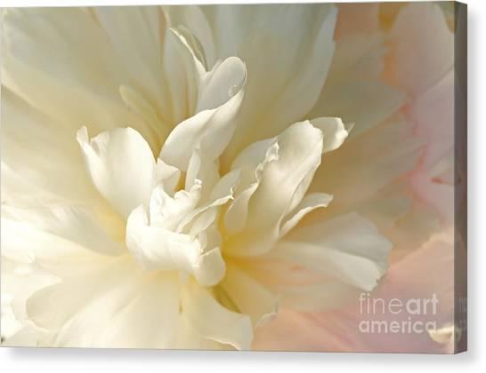 Cream Peony Canvas Print
