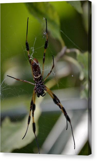 Spider Web Canvas Print - Creepy Crawler by Heather Galloway