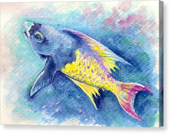 Creole Wrasse Canvas Print