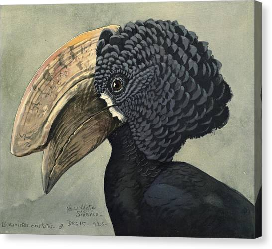 Hornbill Canvas Print - Crested Hornbill by Dreyer Wildlife Print Collections