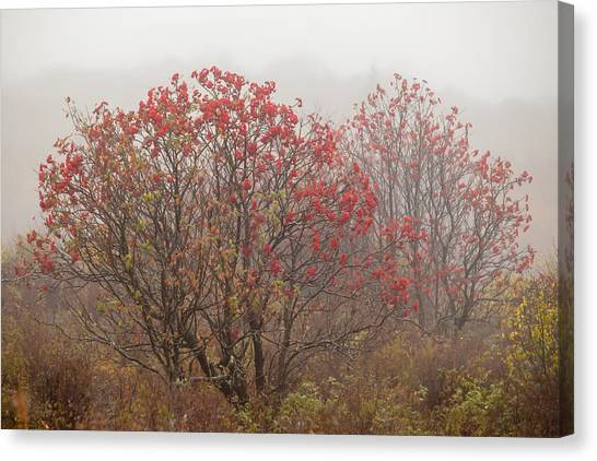 Crimson Fog Canvas Print