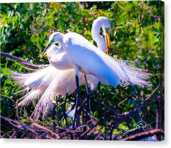 Criss-cross Egrets Canvas Print