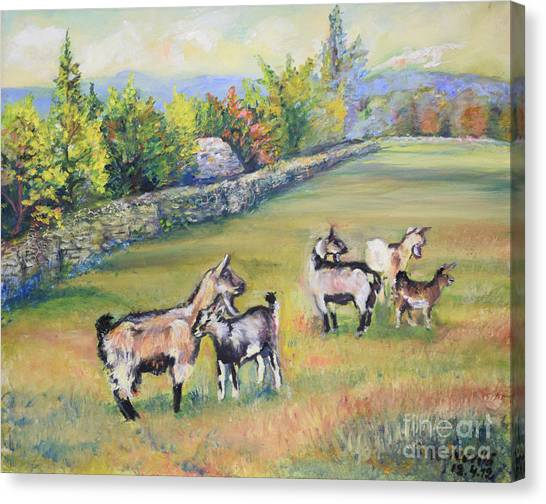 Croatian Goats Canvas Print