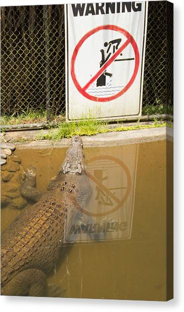 Croc Rules Canvas Print by Debbie Cundy