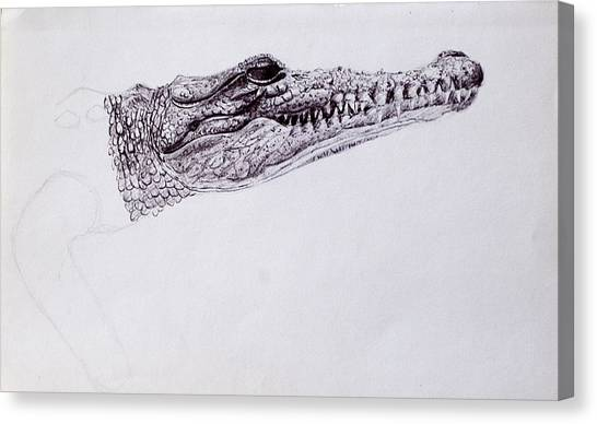 Croc Sketch Canvas Print