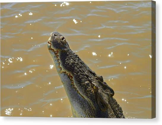 Crocodiles Canvas Print - Crocodile Jumping Out Of The Water by David Wall
