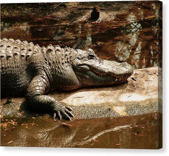 Jaws Canvas Print - Crocodile by Tanya Hamell