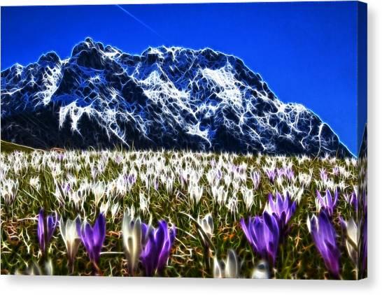 Crocus Meadow Canvas Print