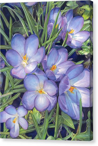 Early Spring Canvas Print - Crocuses by Sandy Haight