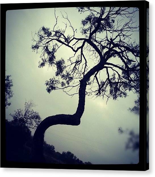 Kirby Canvas Print - Crooked Mesquite by Blake Kirby