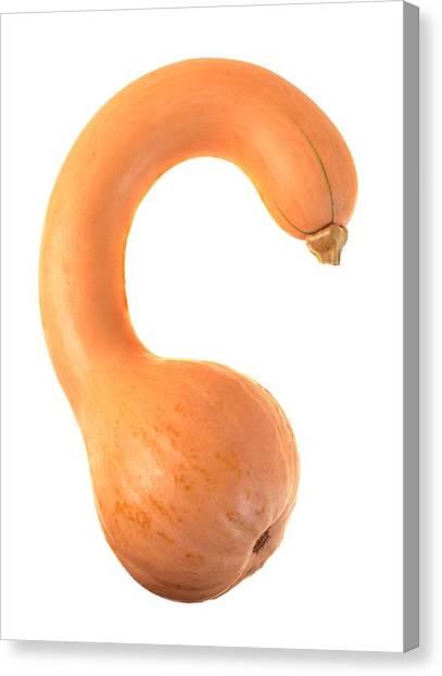 Gourds Canvas Print - Crookneck Squash by Jim Hughes