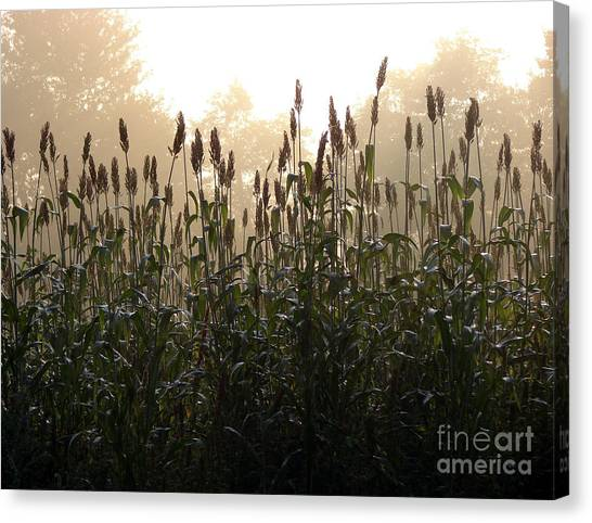 Corn Field Canvas Print - Crops In Fog by Olivier Le Queinec