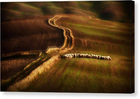 Crossing The Fields Canvas Print by