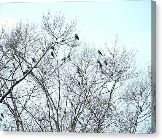 Crow Trees Canvas Print