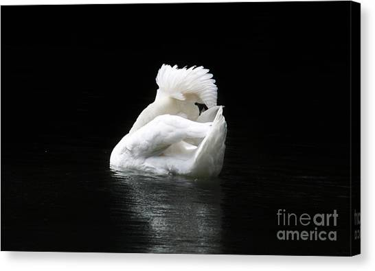 Crown Of Feathers Canvas Print by Lynn Jackson
