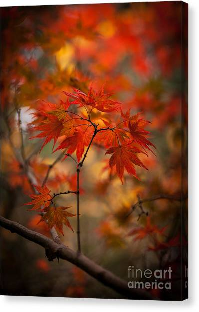 Ace Canvas Print - Crown Of Fire by Mike Reid