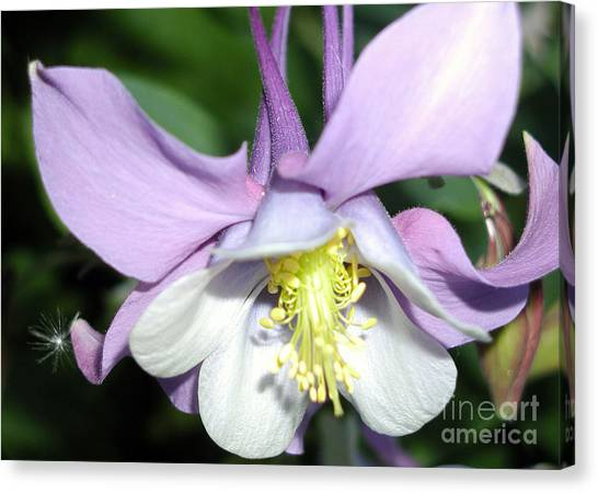 Crowned In Purple Canvas Print
