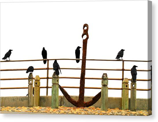 Crows At Anchor Canvas Print