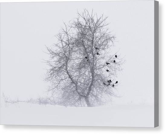 Crows On Tree In Winter Snow Storm Canvas Print