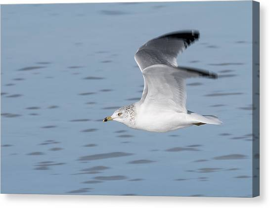 Cruising Altitude Canvas Print