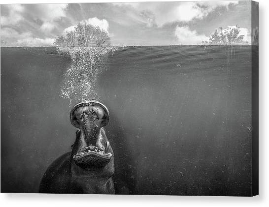 Hippos Canvas Print - Cry Freedom by Peter Poppe