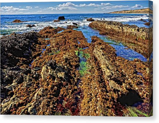 Canvas Print - Crystal Cove Tide Pools  by Donna Pagakis