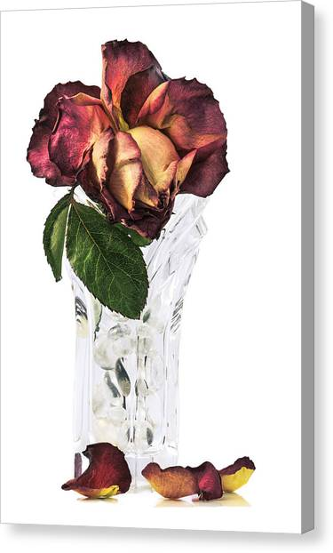 Crystal Rose Canvas Print