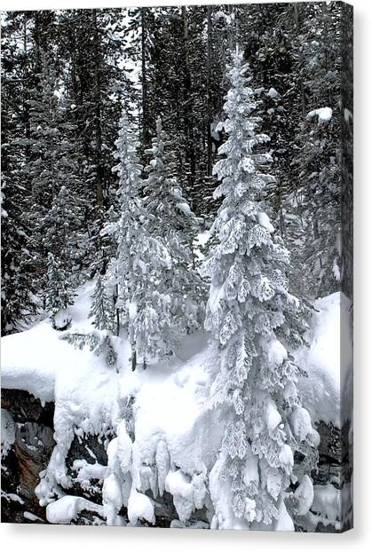 Crystal Trees Of Yellowstone Canvas Print