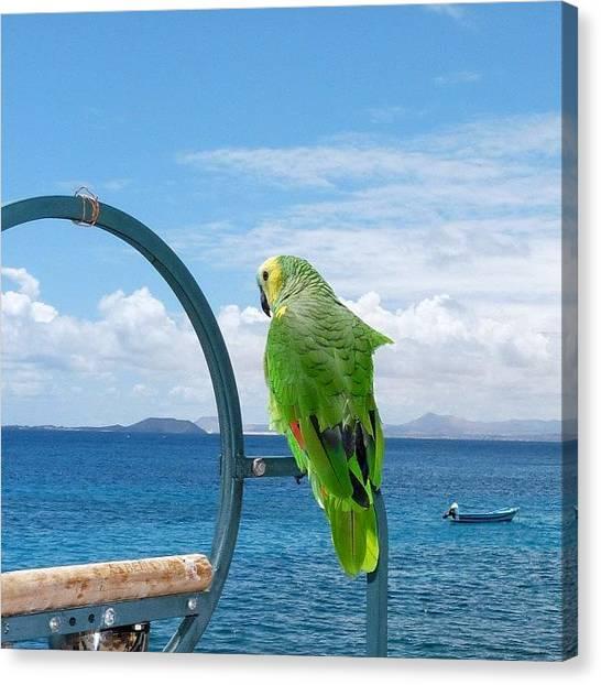 Parrots Canvas Print - cualquier Día Me Pego Un Vuelo Hasta by David Fdez Rementeria