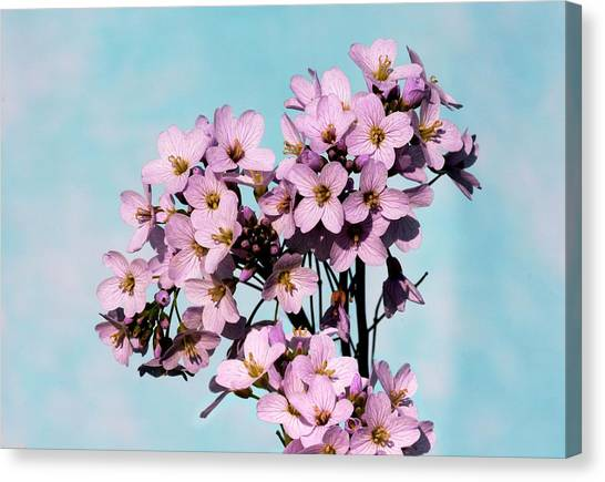 Cuckoos Canvas Print - Cuckoo Flower (cardamine Pratensis) by Brian Gadsby/science Photo Library