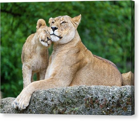 Cuddling With Mom Canvas Print by Picture By Tambako The Jaguar