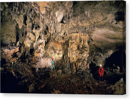 Stalagmites Canvas Print - Cueva Mayor Cave Exploration by Javier Trueba/msf