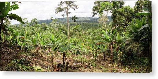 Deforestation Canvas Print - Cultivated Clearing In Amazon by Dr Morley Read