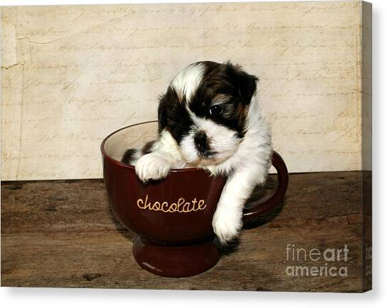 Shih Tzus Canvas Print - Cup Of Puppy by Darren Fisher