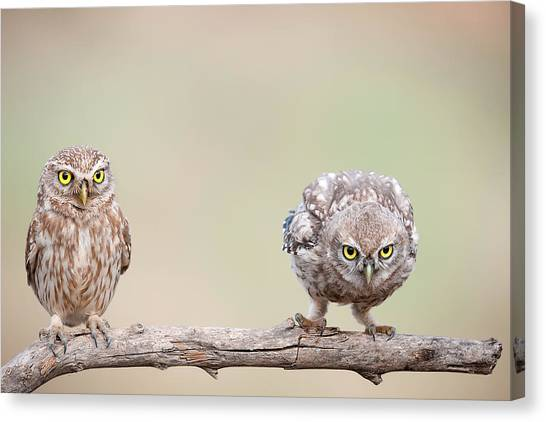 Branch Canvas Print - Curiosity Of Chick by E.amer