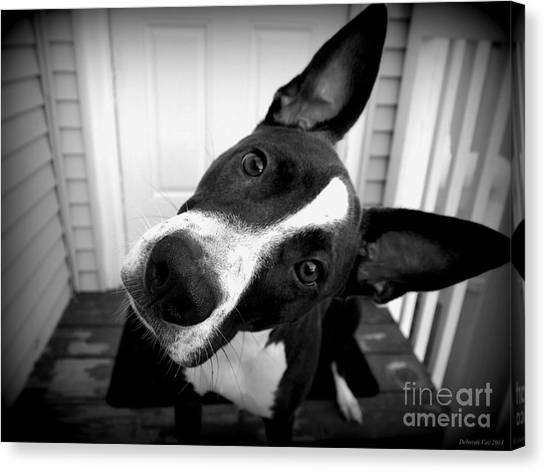 Curious Abby Canvas Print
