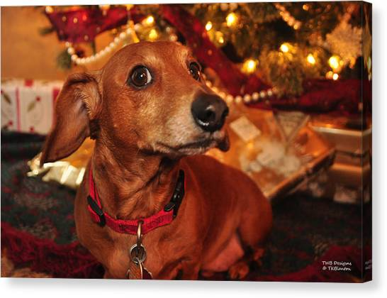 Curious About Christmas Canvas Print