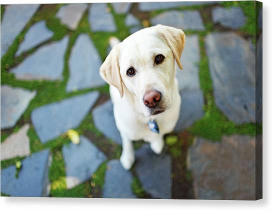 Curious Dog Looking Up Canvas Print