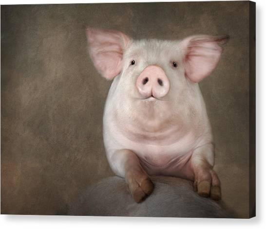 Pig Farms Canvas Print - Curious Pig by Lori Deiter